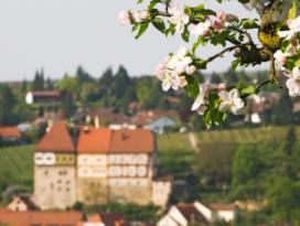 Burg Talheim im Weinbaugebiet Schozachtal