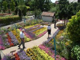 Blumensommer Nordheim