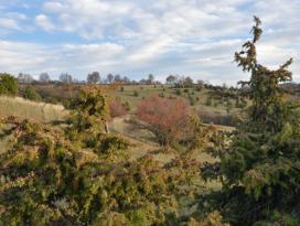 Gromberger Heide bei Lauchheim