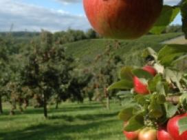 Botanischer Obstgarten