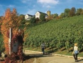 Wein Panorama Weg
