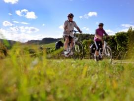 Radfahrer am Württemberger Weinradweg