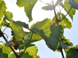 Weinbau & Brennerei Zaiß